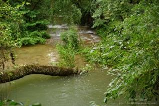 Parque Natural del Monasterio de Piedra(16)