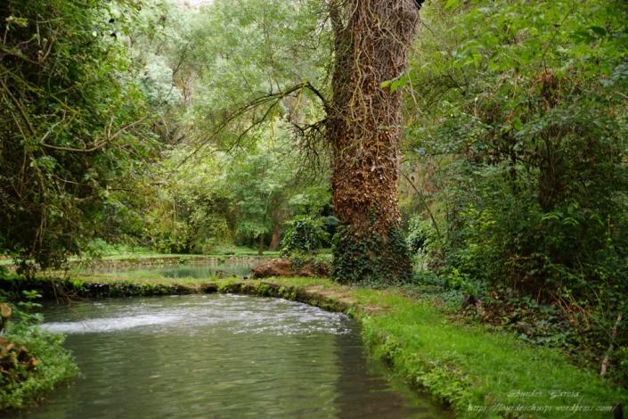 Parque Natural del Monasterio de Piedra(17)
