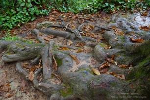 Parque Natural del Monasterio de Piedra(9)